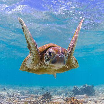 Joyful turtle - print by KaraMurphy