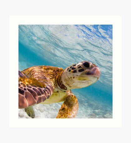 Turtle selfie - print Art Print