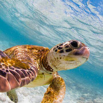 Turtle selfie - print by KaraMurphy