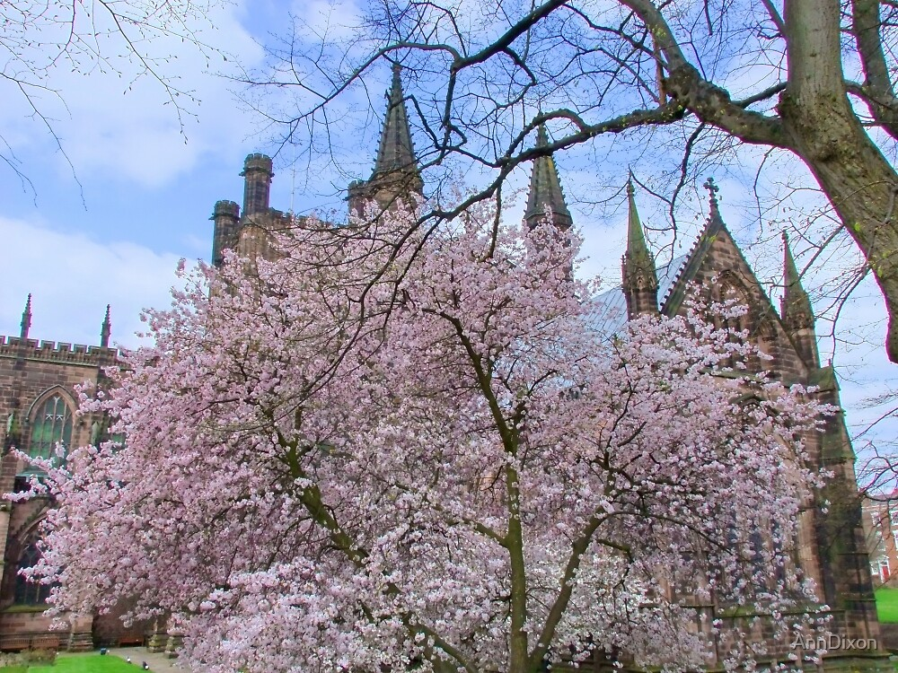 Spring Blossom in Chester Cathedral Garden, England by AnnDixon