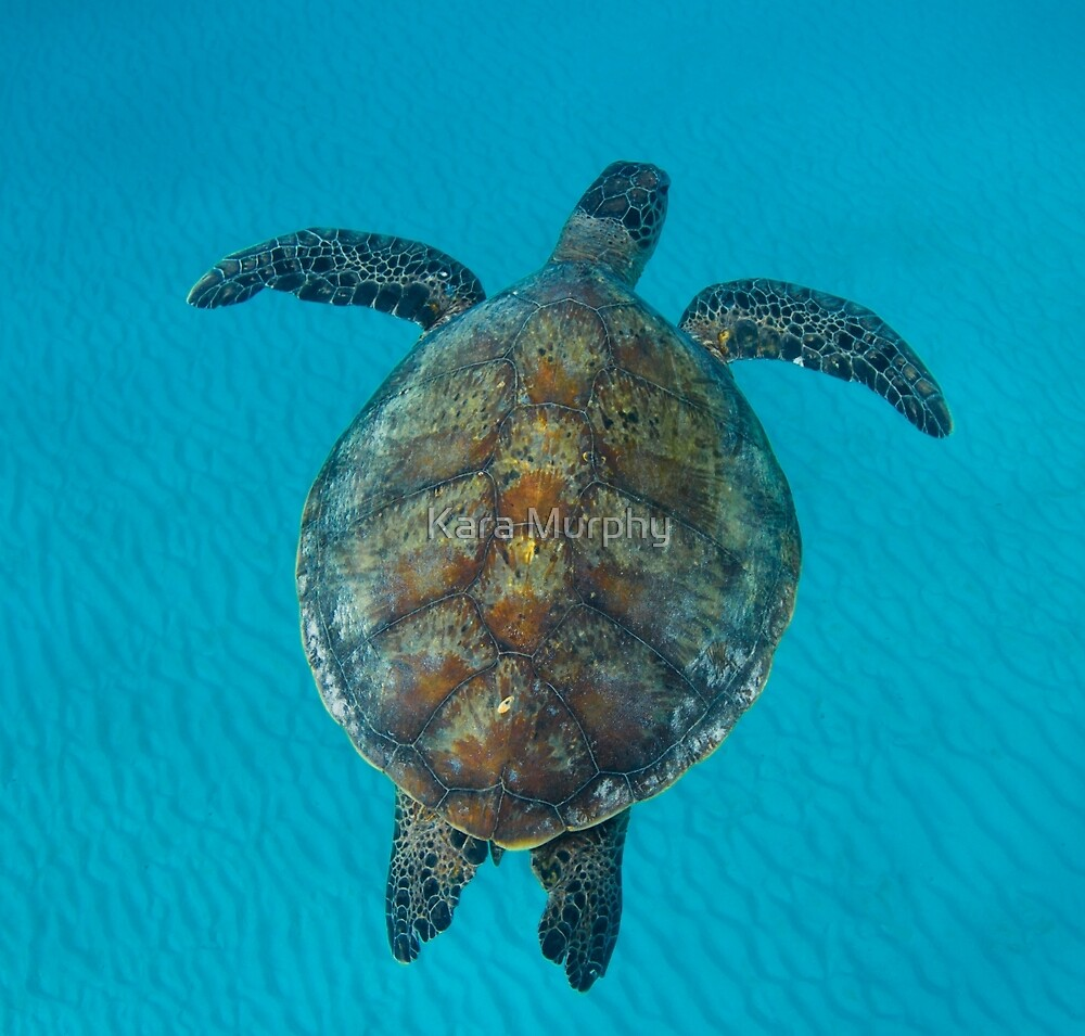 Peace turtle - print by Kara Murphy