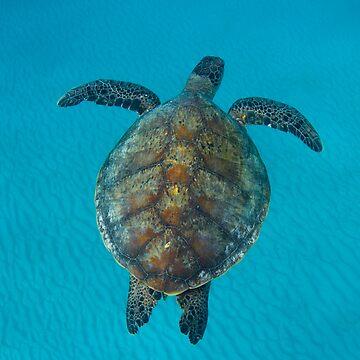 Peace turtle - print by KaraMurphy