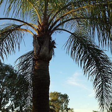 Palm Tree by gjgrob