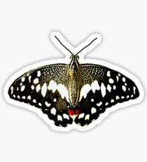 Real Butterfly No. 3 - Black, White and Red Sticker