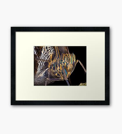 Butterfly - Yellow-edged Giant Owl Framed Print