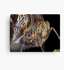 Butterfly - Yellow-edged Giant Owl Canvas Print