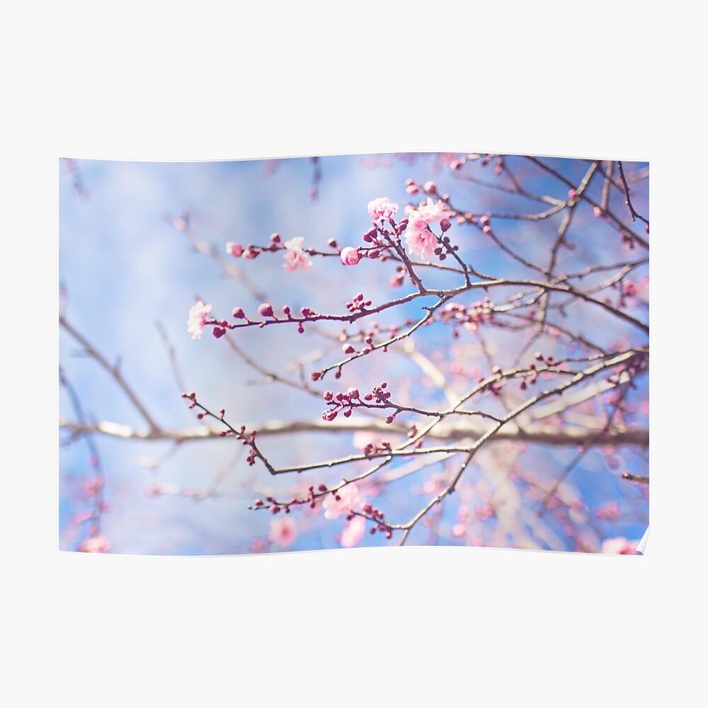 Pink blossom, blue sky Poster