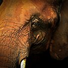 Elephant by Douglas  Stucky