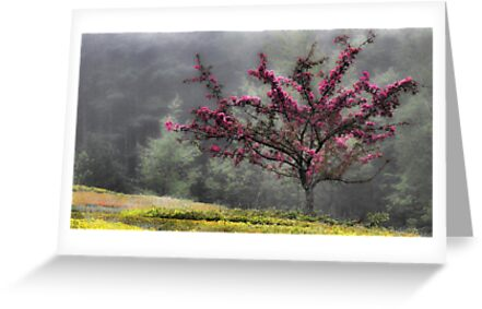 Apple Blossoms - Looking Back at the Beauty of Spring by T.J. Martin