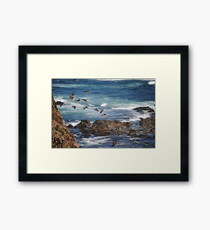 Flight of the Puffins Framed Print