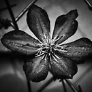Gardening in B & W II by Nate Welk