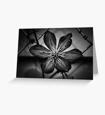 Gardening in B & W II Greeting Card