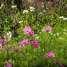 Cosmos & Sweet Pea by vivsworld