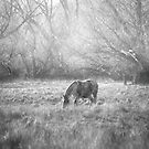 Grazing in the Mist by Linda Cutche