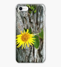 Love Grows Everywhere iPhone Case/Skin