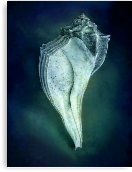 Under the Sea - Shell in Blue by LouiseK