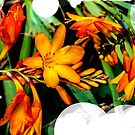 Orange flowers by the canal  by bywhacky