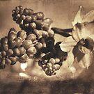 Muscari & Daffodils by Martina Fagan
