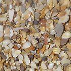 Shells, shells, everywhere by Caroline Clarkson