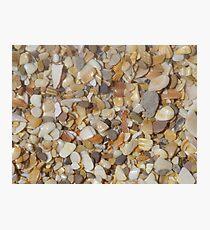 Shells, shells, everywhere Photographic Print
