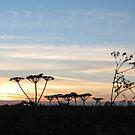 Suffolk sunset by Jax Blunt