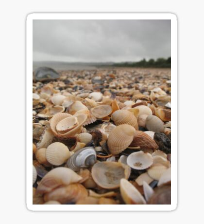 Along the seashell beach Sticker