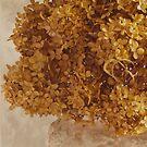 Dried Hydrangea Flower Arrangement  by Sandra Foster