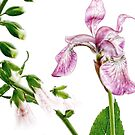 Iris and Foxglove Birthday Card by LouiseK