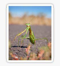 'Who, Me?' Praying Mantis Macro Sticker
