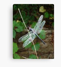 SLATY DRAGONFLY ON SILVER WINGS Canvas Print