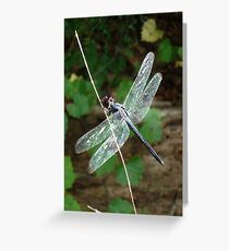 SLATY DRAGONFLY ON SILVER WINGS Greeting Card