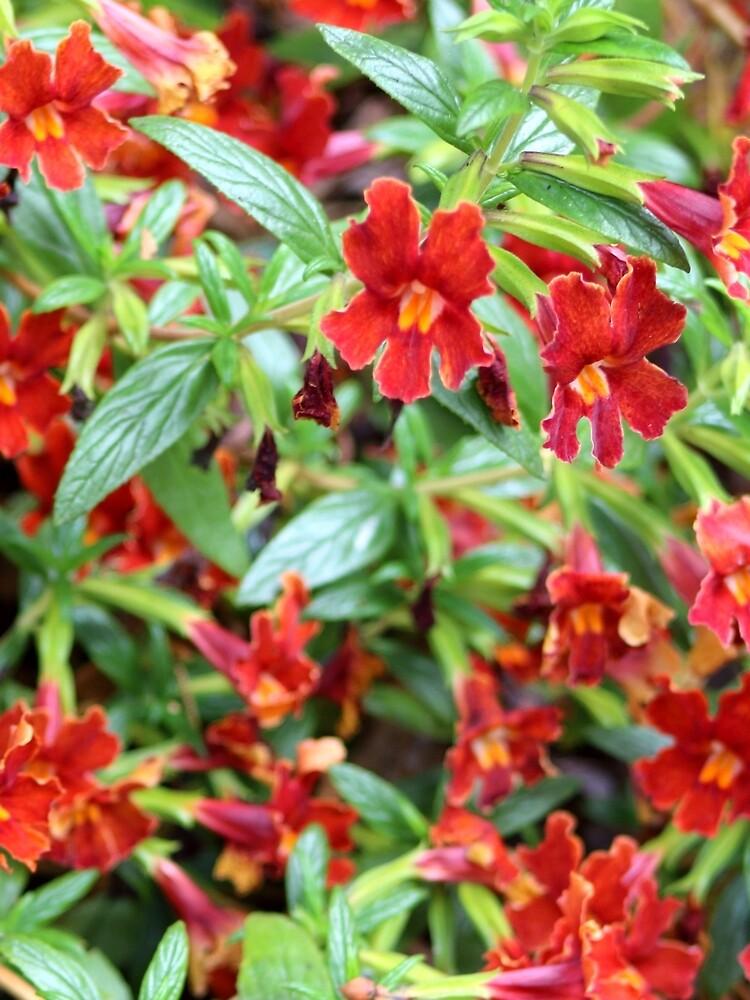 Rot Tropisch von melips