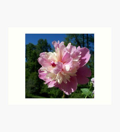 Spring Pinks - Raspberry Sorbet Peony 4 Art Print