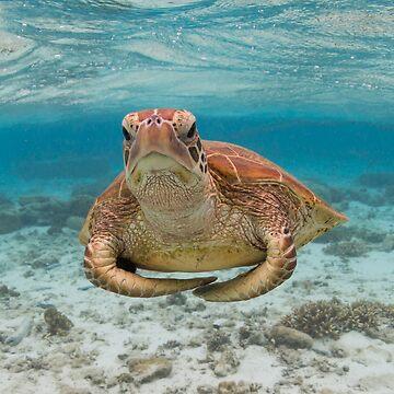 Turtle yoga pose by KaraMurphy