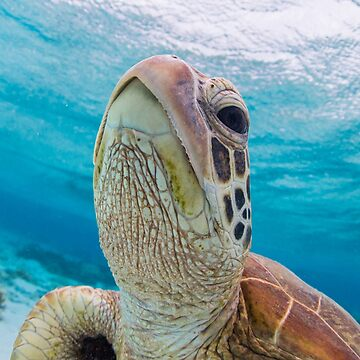 Turtle close-up by KaraMurphy