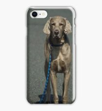 A patient pooch iPhone Case/Skin
