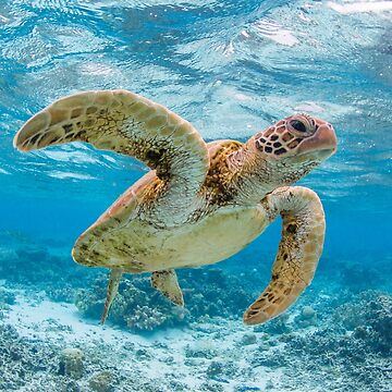 Turtle star by KaraMurphy
