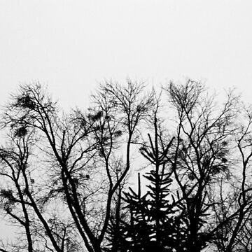 Dark trees by oleksiyvovk