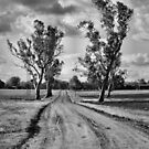 Going Home - Gunnedah NSW Australia by Bev Woodman