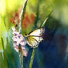 Butterfly watercolor painting by Almondtree