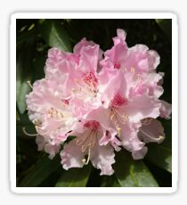 Rhododendrum Flower Card Sticker