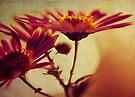 flowers by Ingrid Beddoes