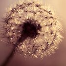 dandelion by Ingrid Beddoes