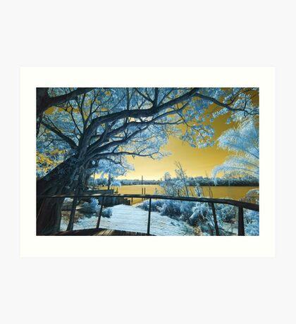 The Fig Tree and the Eleanor Schonell Bridge Art Print