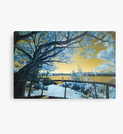 The Fig Tree and the Eleanor Schonell Bridge Metal Print