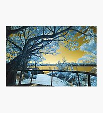 The Fig Tree and the Eleanor Schonell Bridge Photographic Print