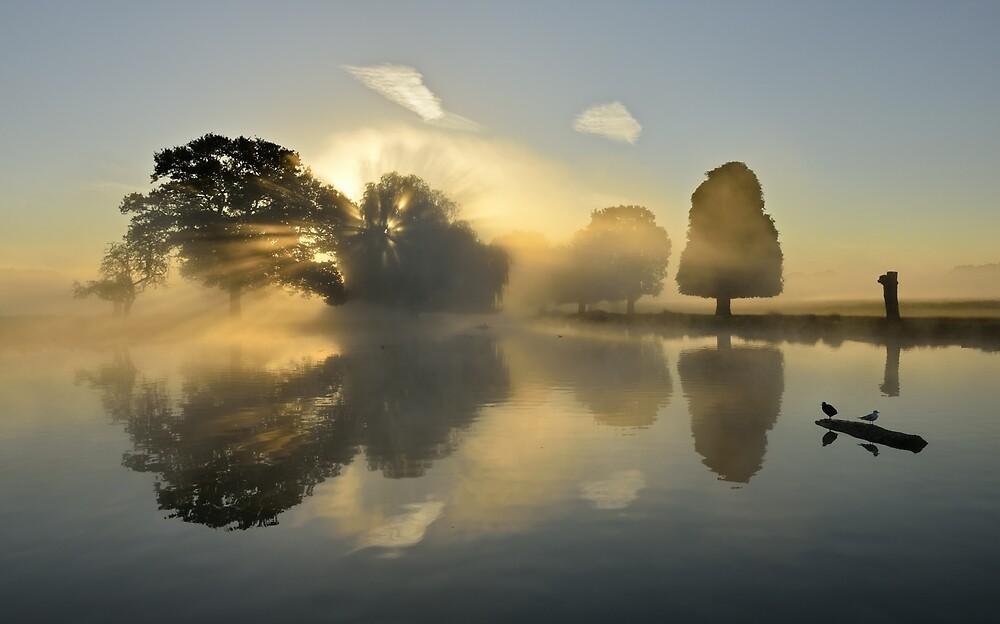 Bushy Park at Sunrise by Kasia Nowak