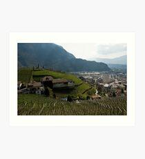 Hillside Vineyard, Bolzano/Bozen, Italy Art Print
