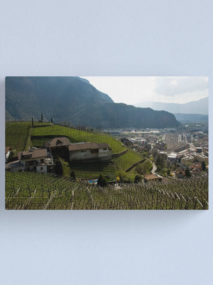 Alternate view of Hillside Vineyard, Bolzano/Bozen, Italy Canvas Print