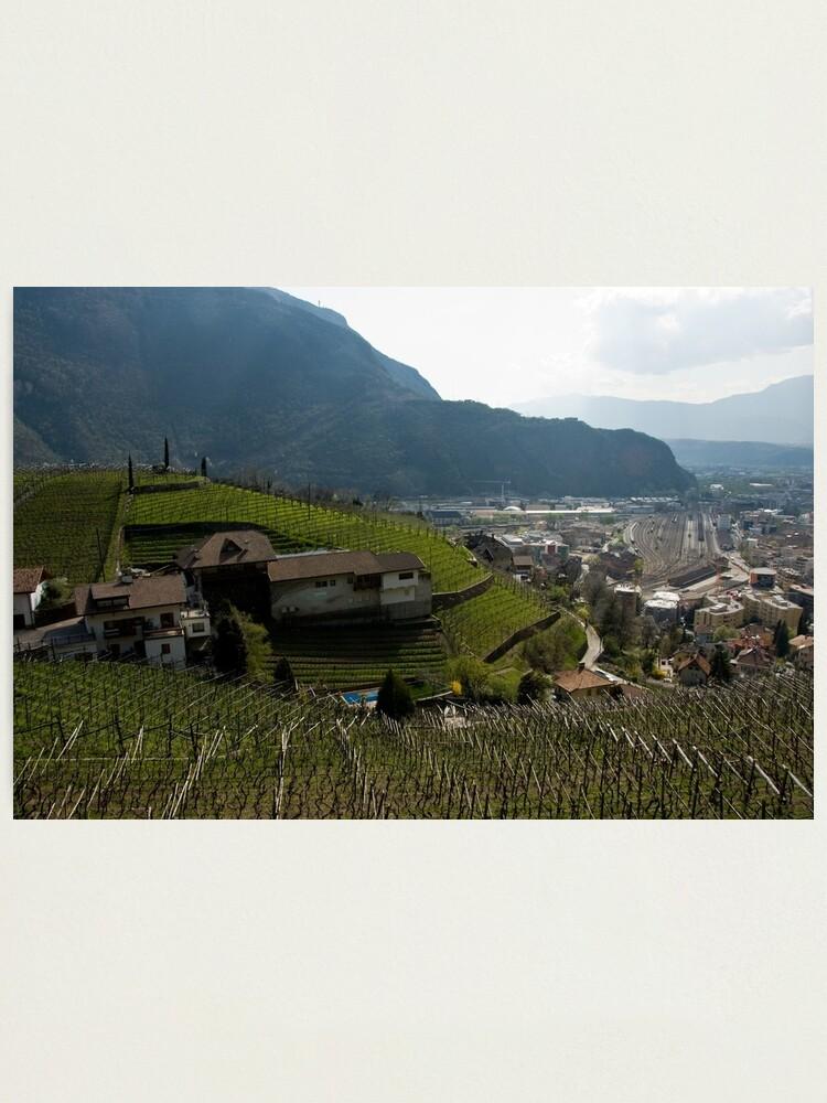 Alternate view of Hillside Vineyard, Bolzano/Bozen, Italy Photographic Print